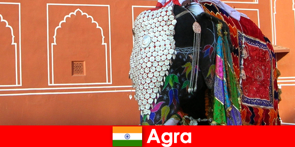 Vadon turisták Agra szeretik a különböző állatok