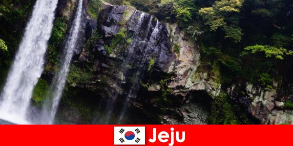 Jeju Dél-Koreában a szubtrópusi vulkáni sziget lenyűgöző erdők külföldiek