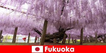 Természetjárás idegeneknek Fukuoka Japán érintetlen természetében