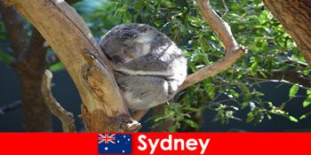 Úti cél Sydney Ausztrália az egzotikus állatkertben éjszakai tapasztalattal