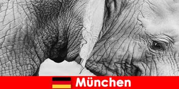 Különleges utazás a látogatók számára a legerdősebb állatkert Németország München